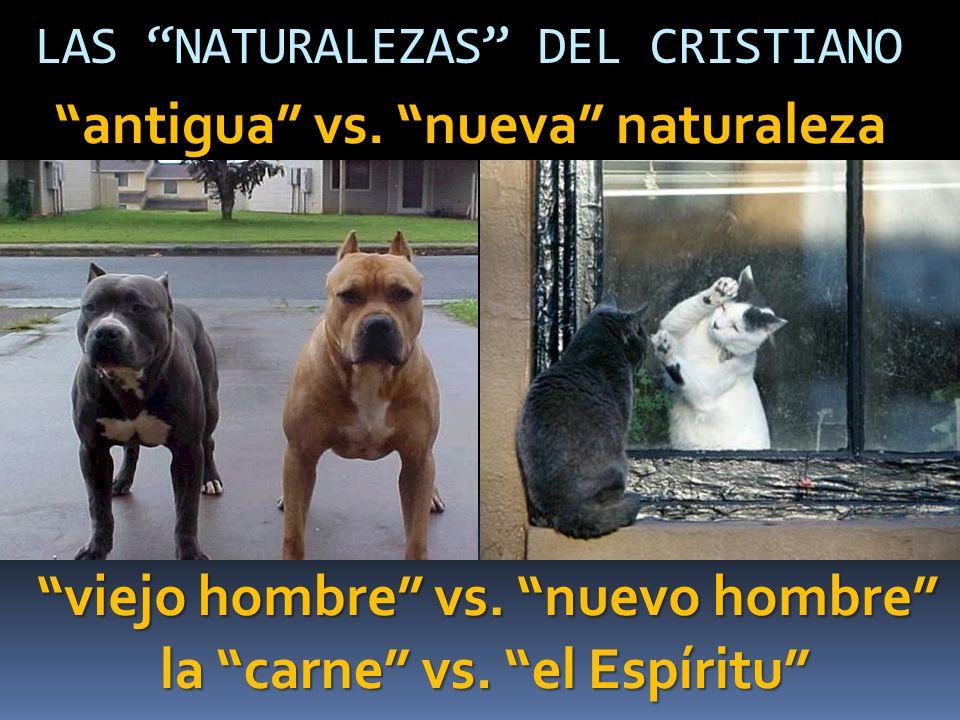 LAS NATURALEZAS DEL CRISTIANO viejo hombre vs. nuevo hombre la carne vs. el Espíritu antigua vs. nueva naturaleza