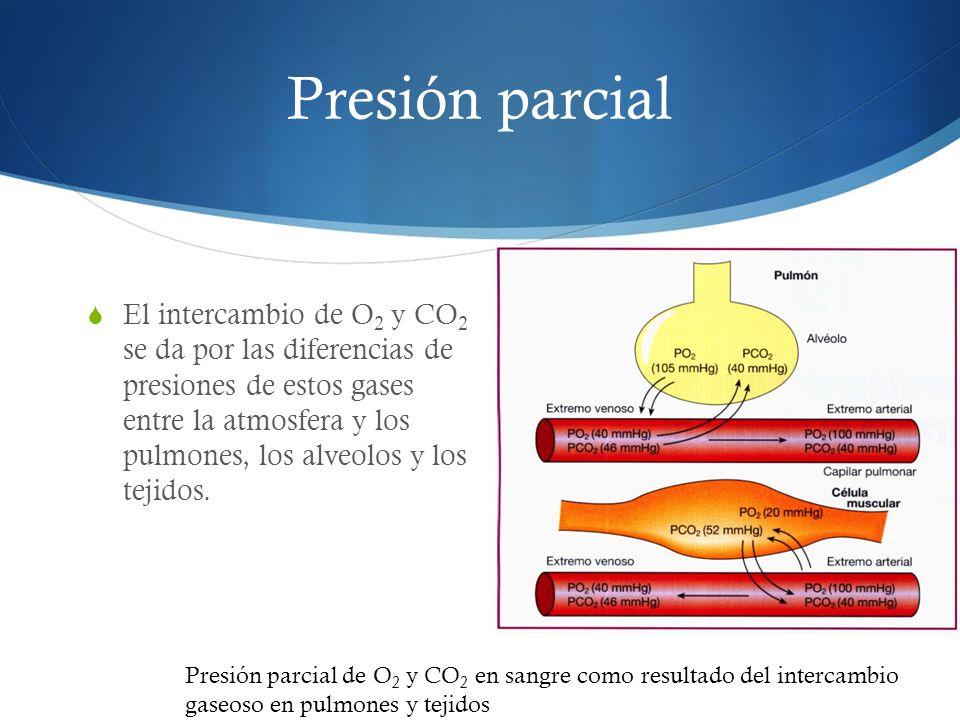 El intercambio de O 2 y CO 2 se da por las diferencias de presiones de estos gases entre la atmosfera y los pulmones, los alveolos y los tejidos.