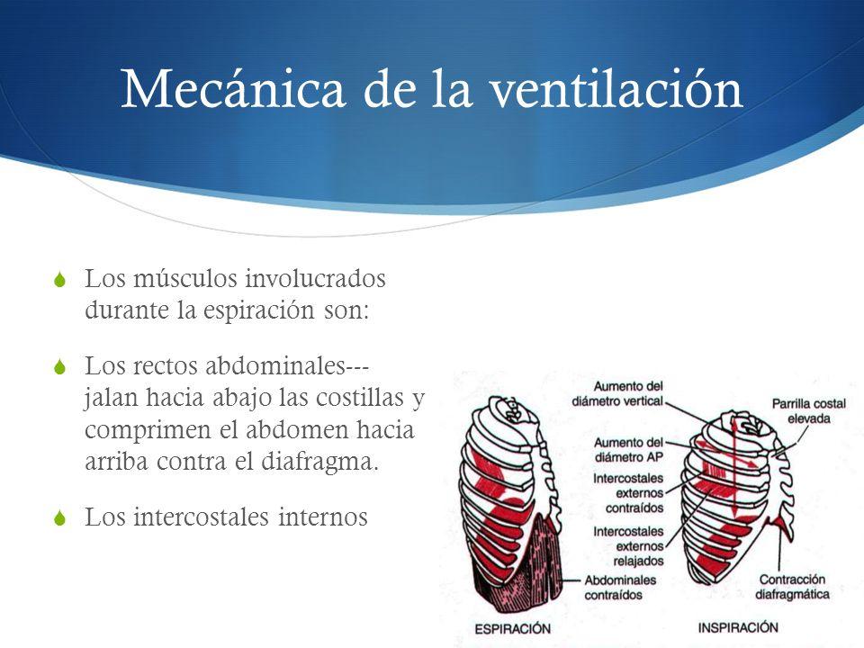 Los músculos involucrados durante la espiración son: Los rectos abdominales--- jalan hacia abajo las costillas y comprimen el abdomen hacia arriba contra el diafragma.