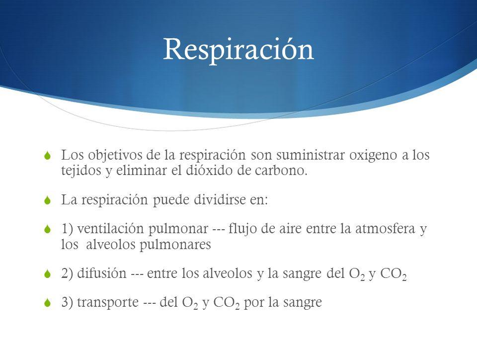 Transporte del CO 2 En reposo el transporte de CO 2 desde los tejidos a los pulmones es de aproximadamente 4 ml de CO 2 por cada 100 ml de sangre.