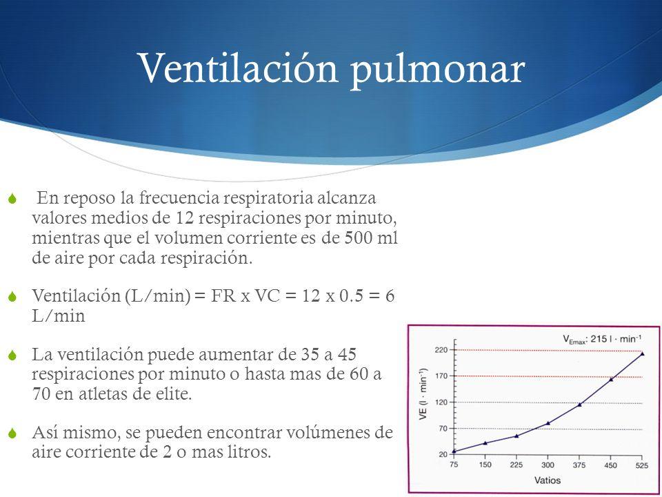 Ventilación pulmonar En reposo la frecuencia respiratoria alcanza valores medios de 12 respiraciones por minuto, mientras que el volumen corriente es de 500 ml de aire por cada respiración.