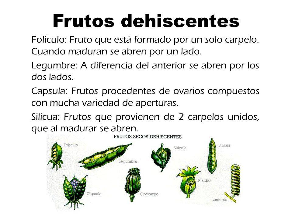 Frutos dehiscentes Folículo: Fruto que está formado por un solo carpelo.