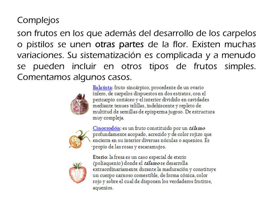 Complejos son frutos en los que además del desarrollo de los carpelos o pistilos se unen otras partes de la flor.