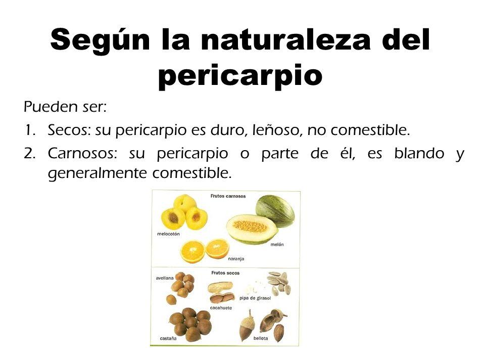 Según la naturaleza del pericarpio Pueden ser: 1.Secos: su pericarpio es duro, leñoso, no comestible.