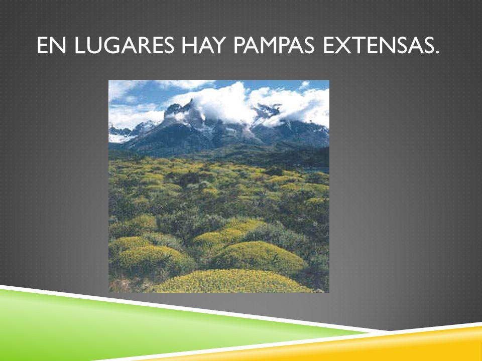 EN LUGARES HAY PAMPAS EXTENSAS.
