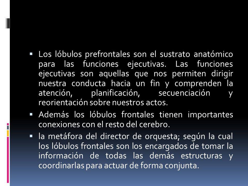 Los lóbulos prefrontales son el sustrato anatómico para las funciones ejecutivas. Las funciones ejecutivas son aquellas que nos permiten dirigir nuest