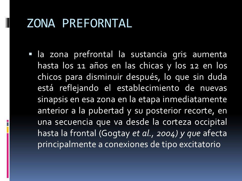 ZONA PREFORNTAL la zona prefrontal la sustancia gris aumenta hasta los 11 años en las chicas y los 12 en los chicos para disminuir después, lo que sin