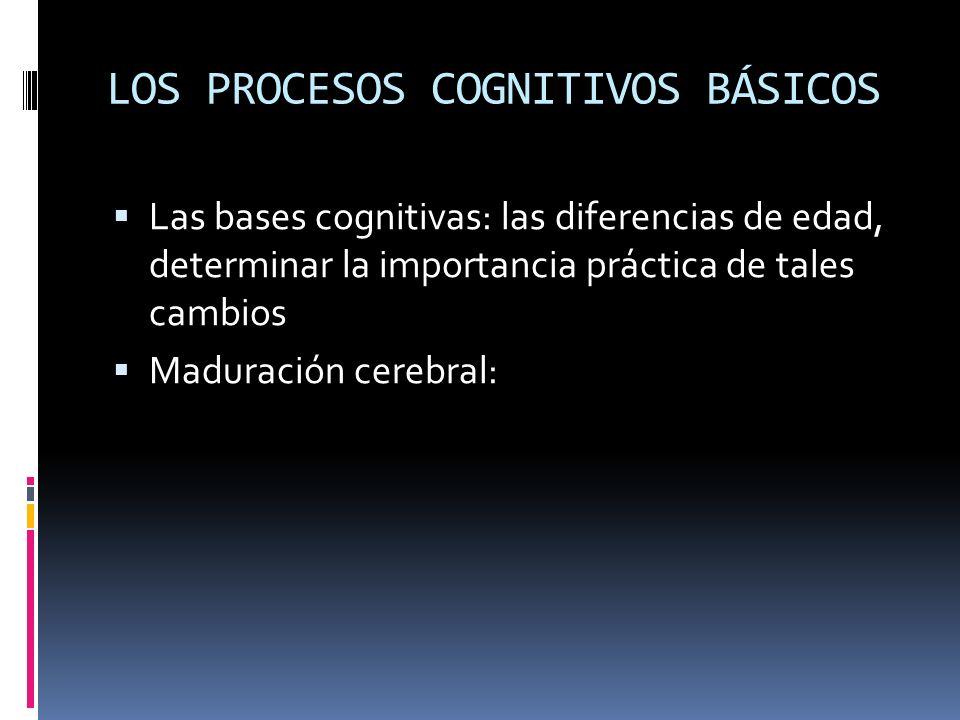 LOS PROCESOS COGNITIVOS BÁSICOS Las bases cognitivas: las diferencias de edad, determinar la importancia práctica de tales cambios Maduración cerebral