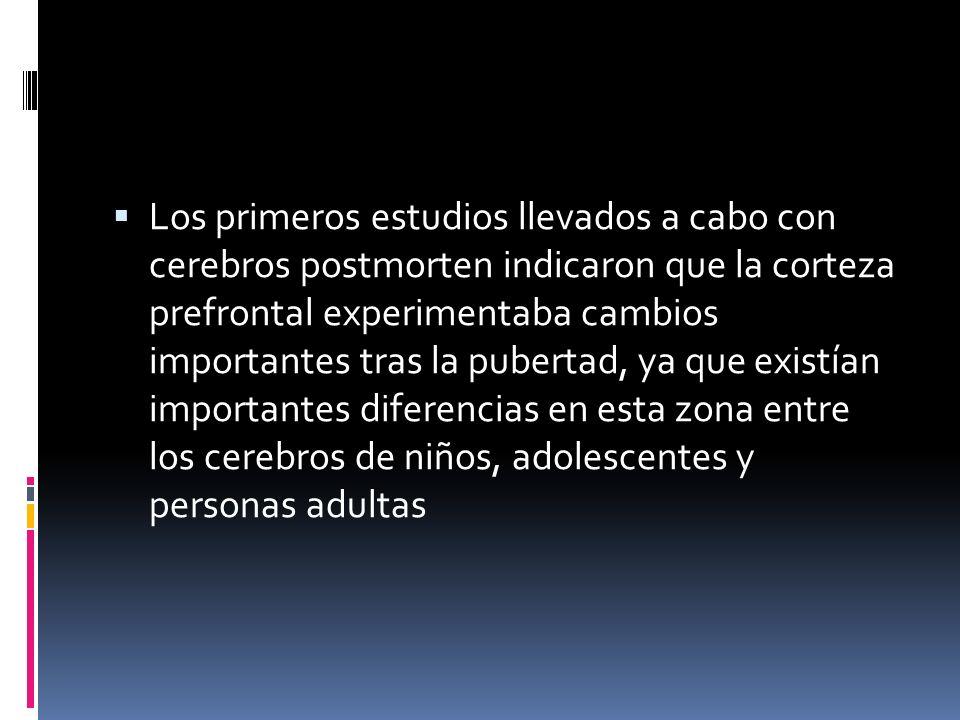 Los primeros estudios llevados a cabo con cerebros postmorten indicaron que la corteza prefrontal experimentaba cambios importantes tras la pubertad,