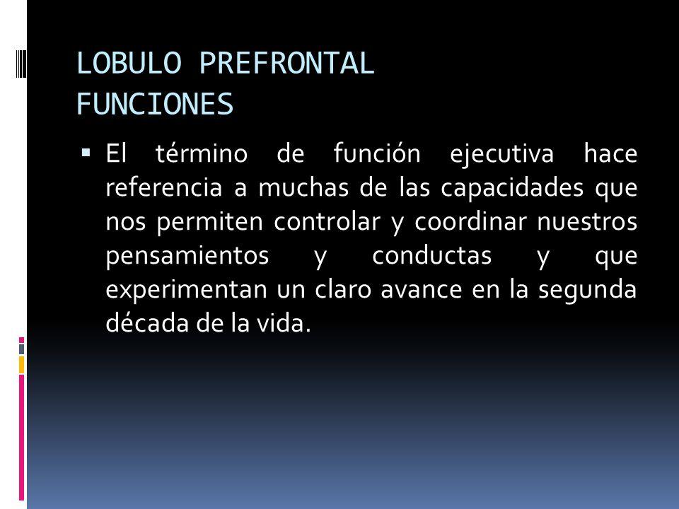LOBULO PREFRONTAL FUNCIONES El término de función ejecutiva hace referencia a muchas de las capacidades que nos permiten controlar y coordinar nuestro
