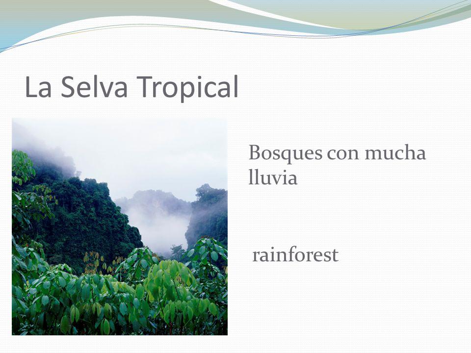 La Selva Tropical Bosques con mucha lluvia rainforest
