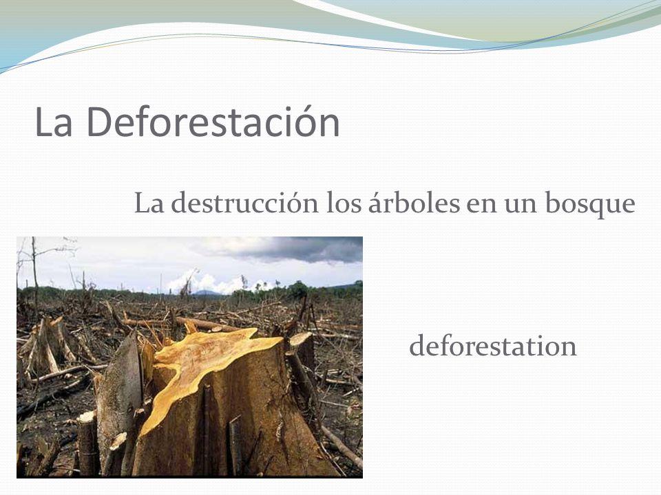 La Deforestación La destrucción los árboles en un bosque deforestation