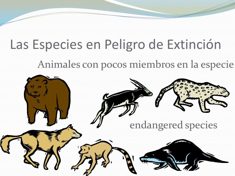 Las Especies en Peligro de Extinción Animales con pocos miembros en la especie endangered species