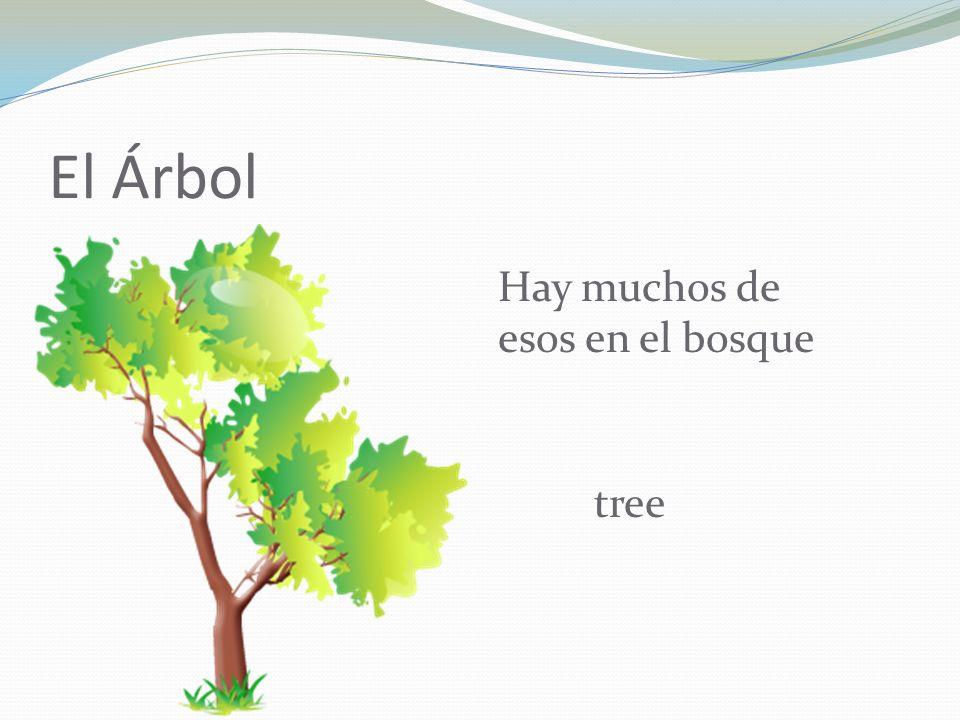 El Árbol Hay muchos de esos en el bosque tree