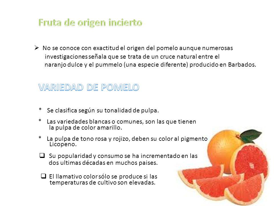 No se conoce con exactitud el origen del pomelo aunque numerosas investigaciones señala que se trata de un cruce natural entre el naranjo dulce y el pummelo (una especie diferente) producido en Barbados.