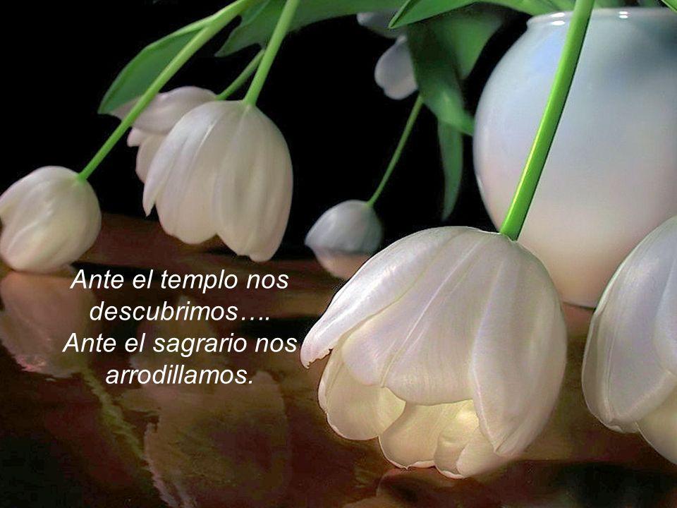 www.vitanoblepowerpoints.net La esbeltez de la palmera, el tinte delicado de las flores, la amorosa mirada del ciervo,