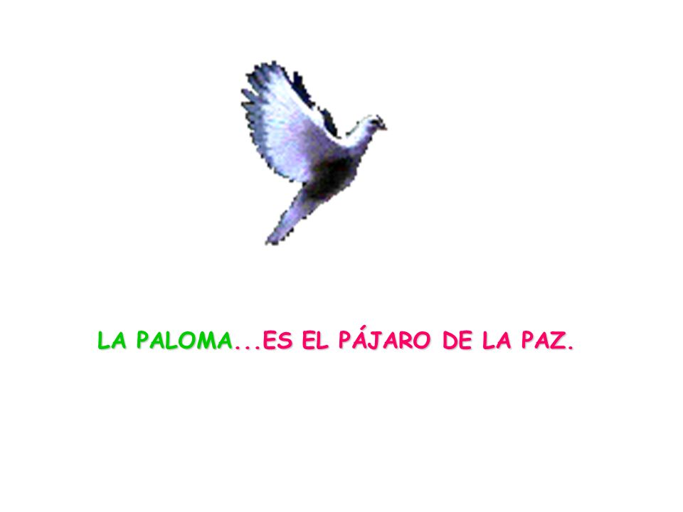 LA PALOMA...ES EL PÁJARO DE LA PAZ.