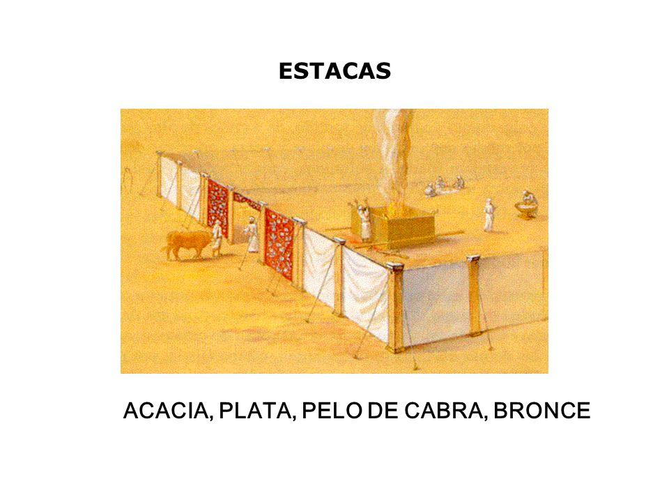ESTACAS ACACIA, PLATA, PELO DE CABRA, BRONCE