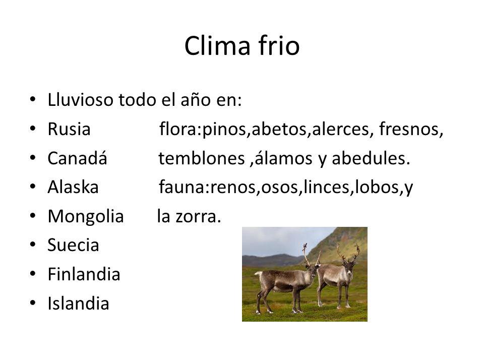 Clima frio Lluvioso todo el año en: Rusia flora:pinos,abetos,alerces, fresnos, Canadá temblones,álamos y abedules. Alaska fauna:renos,osos,linces,lobo
