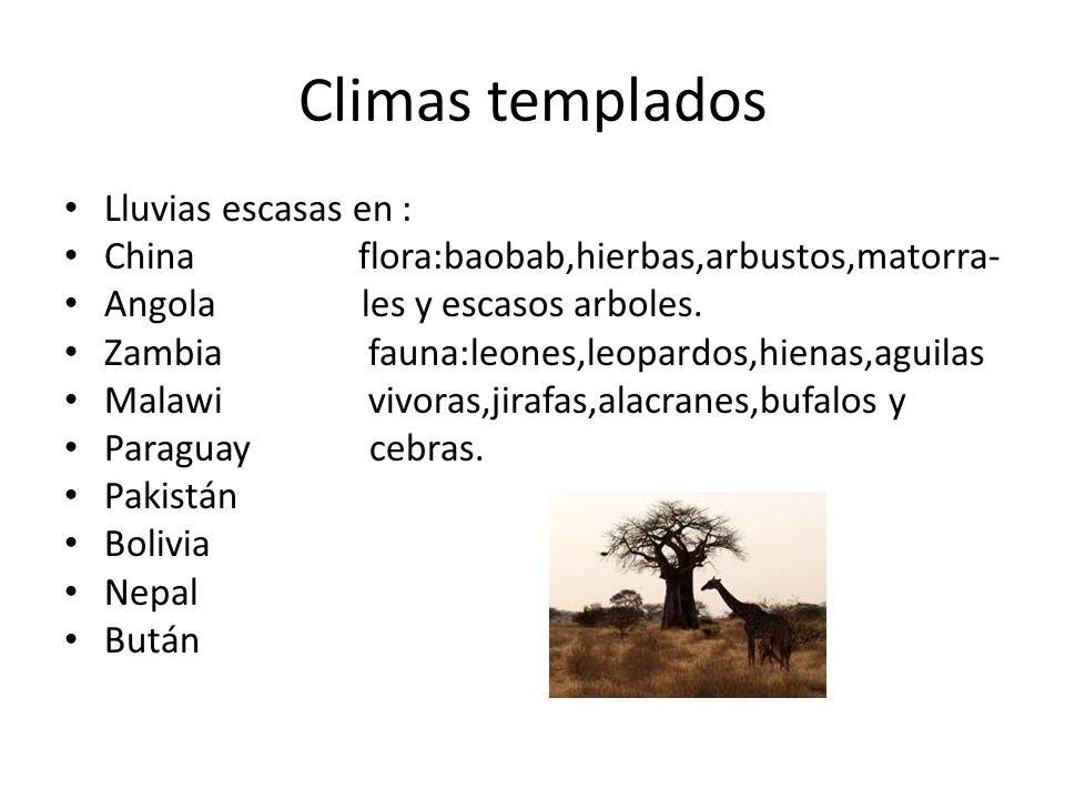 Climas templados Lluvias escasas en : China flora:baobab,hierbas,arbustos,matorra- Angola les y escasos arboles. Zambia fauna:leones,leopardos,hienas,
