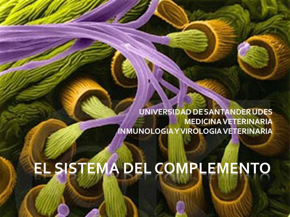 UNIVERSIDAD DE SANTANDER UDES MEDICINA VETERINARIA INMUNOLOGIA Y VIROLOGIA VETERINARIA