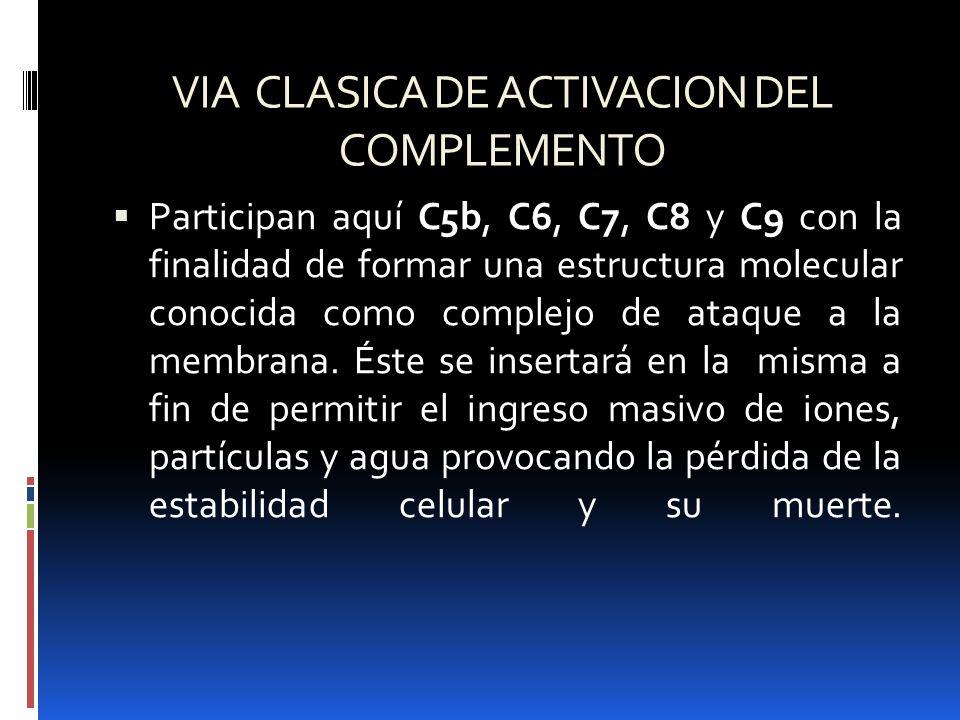 VIA CLASICA DE ACTIVACION DEL COMPLEMENTO Participan aquí C5b, C6, C7, C8 y C9 con la finalidad de formar una estructura molecular conocida como compl