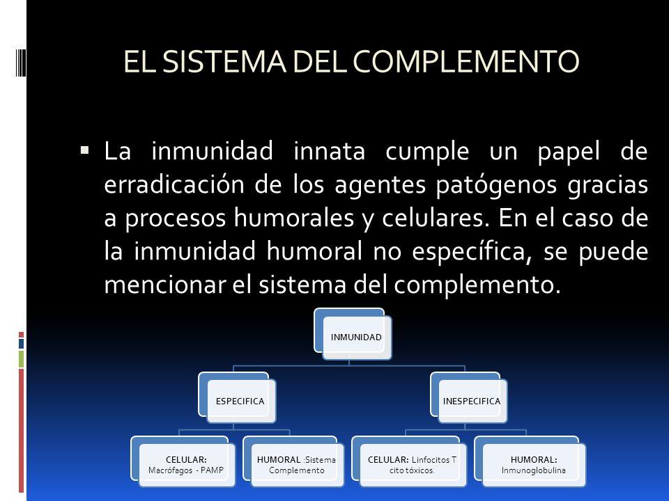 EL SISTEMA DEL COMPLEMENTO La inmunidad innata cumple un papel de erradicación de los agentes patógenos gracias a procesos humorales y celulares. En e