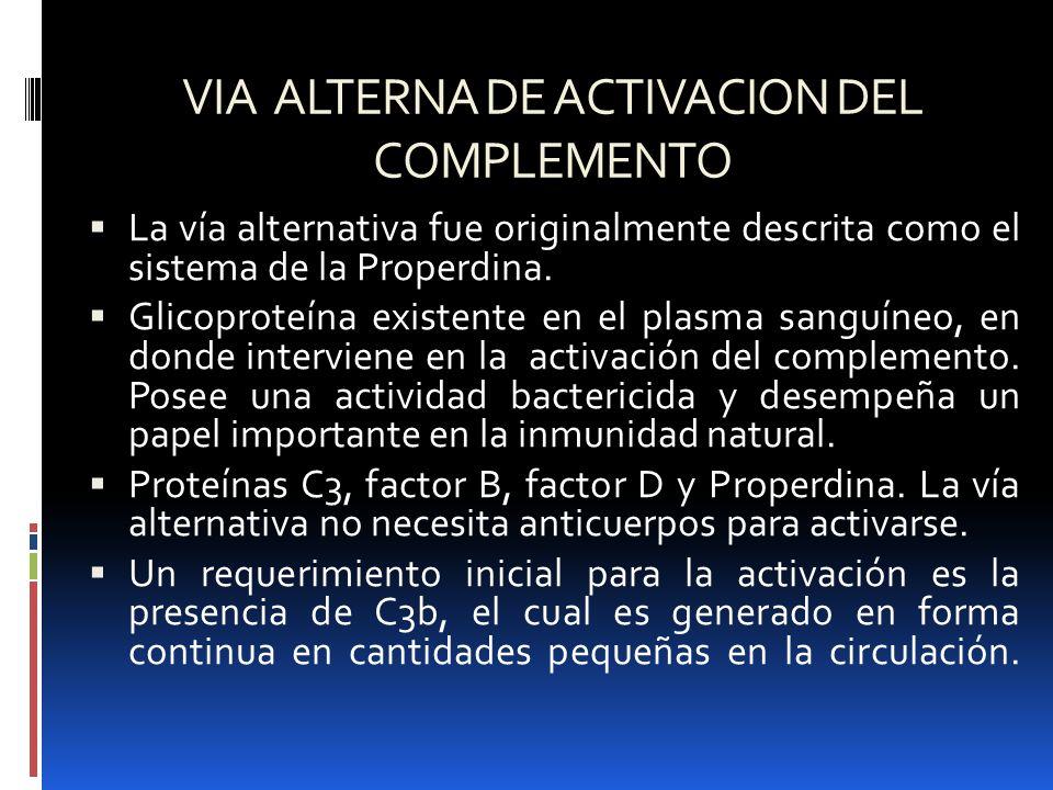 VIA ALTERNA DE ACTIVACION DEL COMPLEMENTO La vía alternativa fue originalmente descrita como el sistema de la Properdina. Glicoproteína existente en e