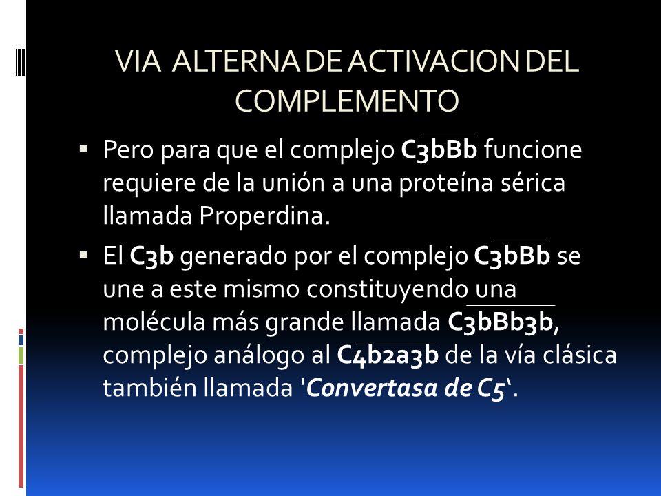 VIA ALTERNA DE ACTIVACION DEL COMPLEMENTO Pero para que el complejo C3bBb funcione requiere de la unión a una proteína sérica llamada Properdina. El C