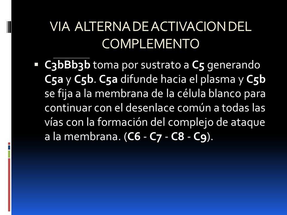 VIA ALTERNA DE ACTIVACION DEL COMPLEMENTO C3bBb3b toma por sustrato a C5 generando C5a y C5b. C5a difunde hacia el plasma y C5b se fija a la membrana