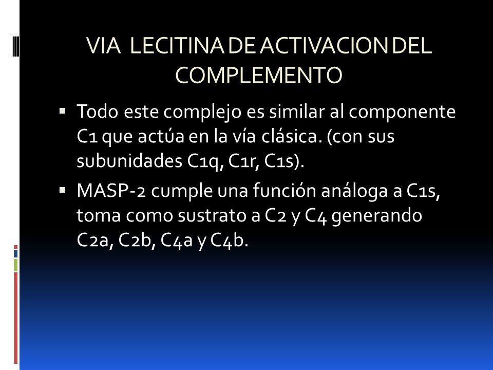 VIA LECITINA DE ACTIVACION DEL COMPLEMENTO Todo este complejo es similar al componente C1 que actúa en la vía clásica. (con sus subunidades C1q, C1r,