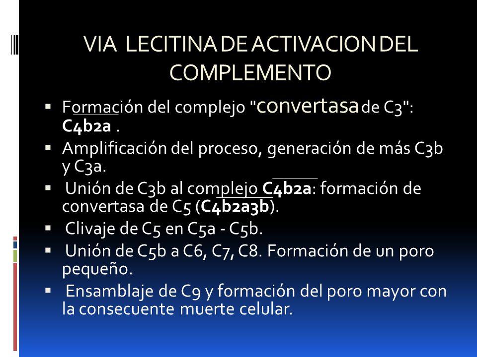 VIA LECITINA DE ACTIVACION DEL COMPLEMENTO Formación del complejo