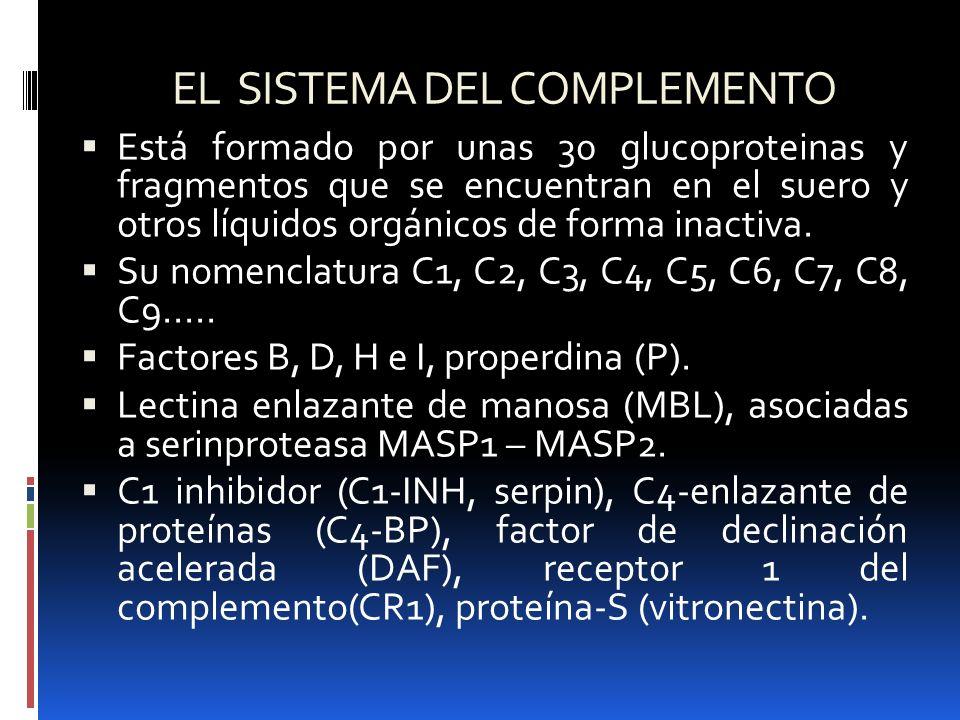 EL SISTEMA DEL COMPLEMENTO Está formado por unas 30 glucoproteinas y fragmentos que se encuentran en el suero y otros líquidos orgánicos de forma inac