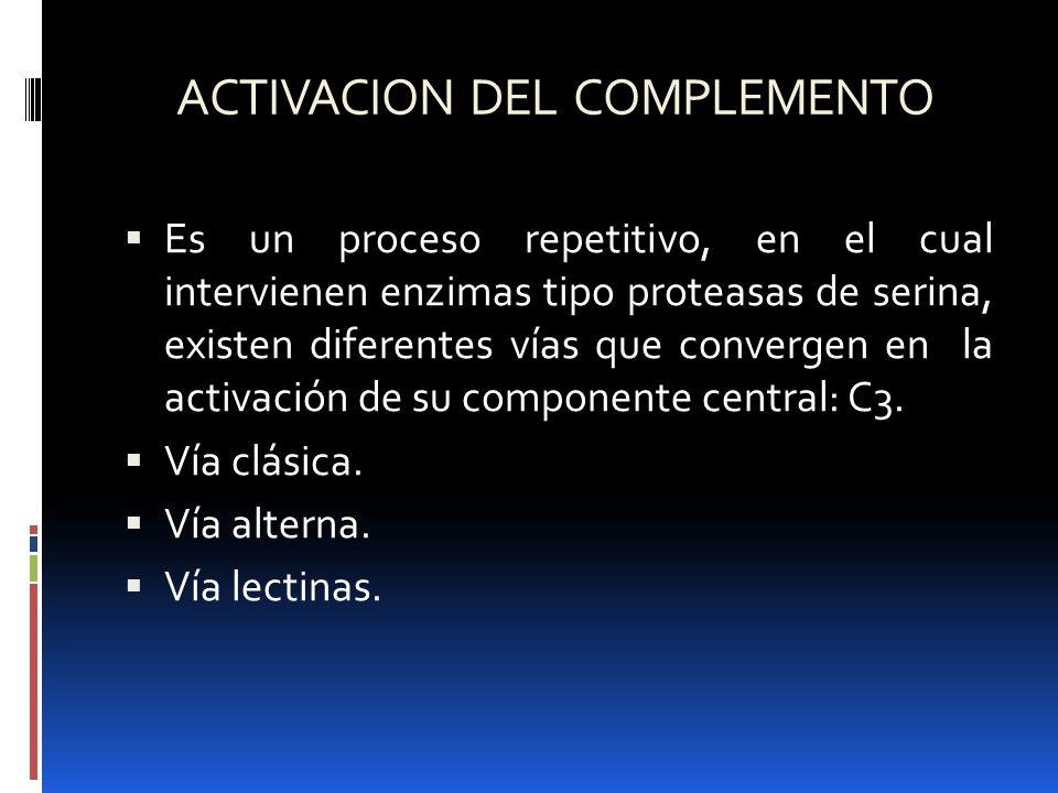 ACTIVACION DEL COMPLEMENTO Es un proceso repetitivo, en el cual intervienen enzimas tipo proteasas de serina, existen diferentes vías que convergen en