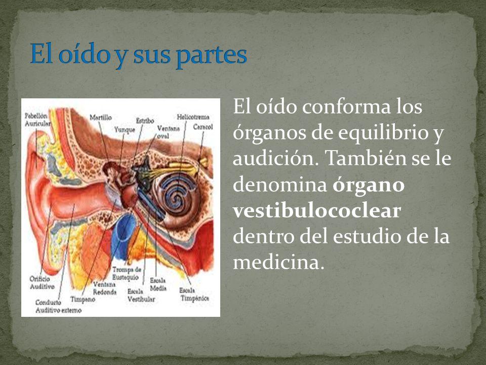 El oído conforma los órganos de equilibrio y audición. También se le denomina órgano vestibulococlear dentro del estudio de la medicina.