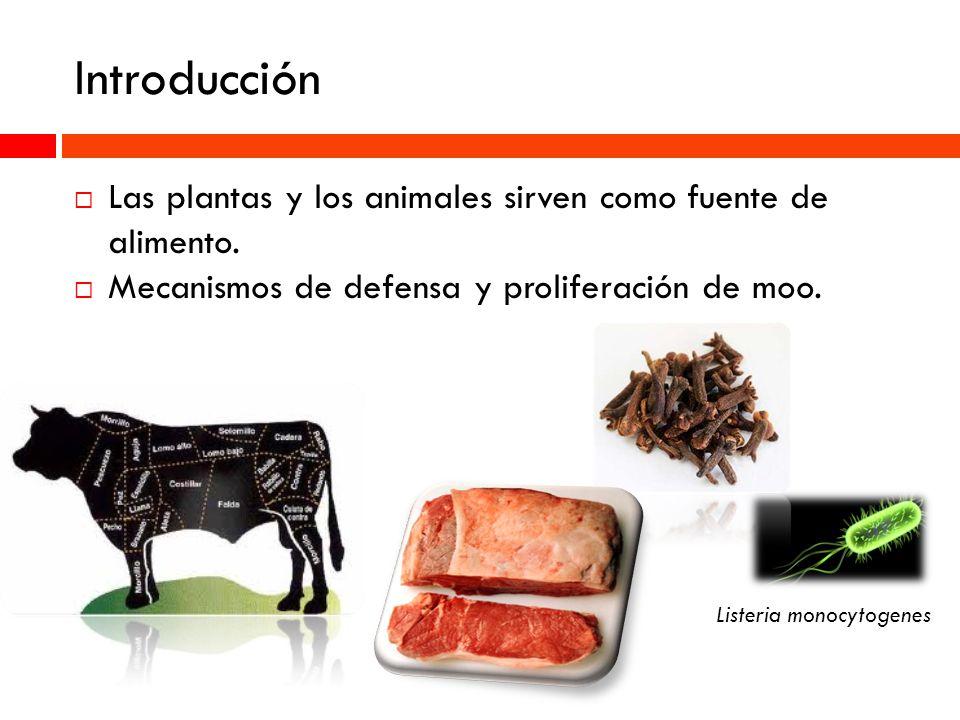 Introducción Las plantas y los animales sirven como fuente de alimento. Mecanismos de defensa y proliferación de moo. Listeria monocytogenes