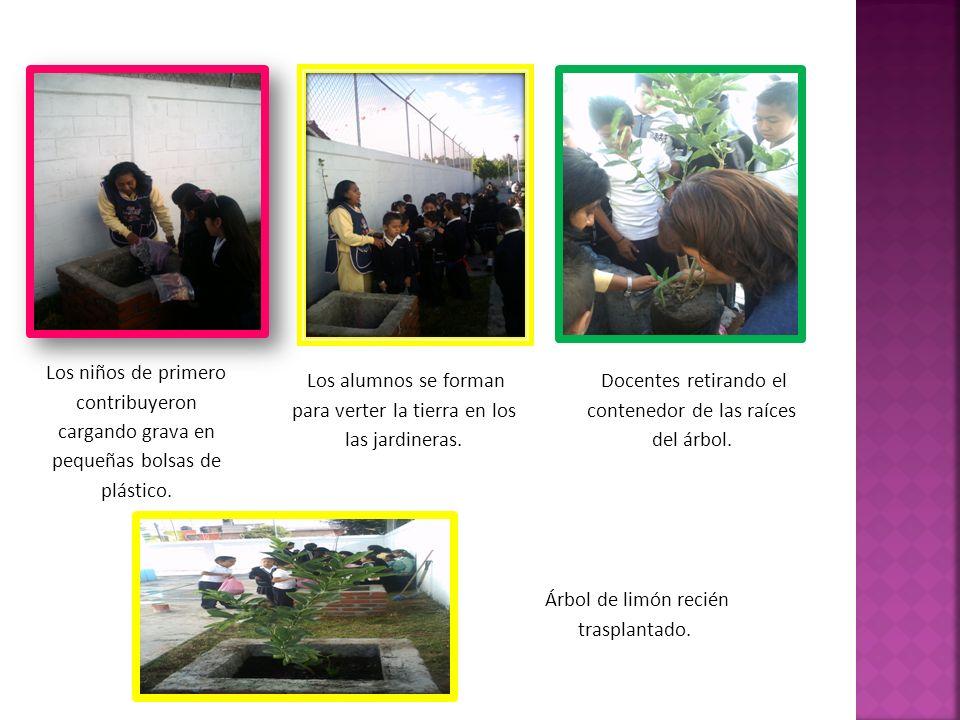 Los niños de primero contribuyeron cargando grava en pequeñas bolsas de plástico. Los alumnos se forman para verter la tierra en los las jardineras. D