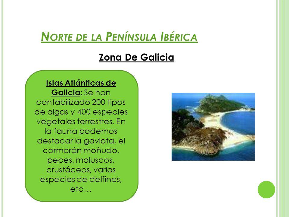N ORTE DE LA P ENÍNSULA I BÉRICA Zona De Galicia Islas Atlánticas de Galicia : Se han contabilizado 200 tipos de algas y 400 especies vegetales terres