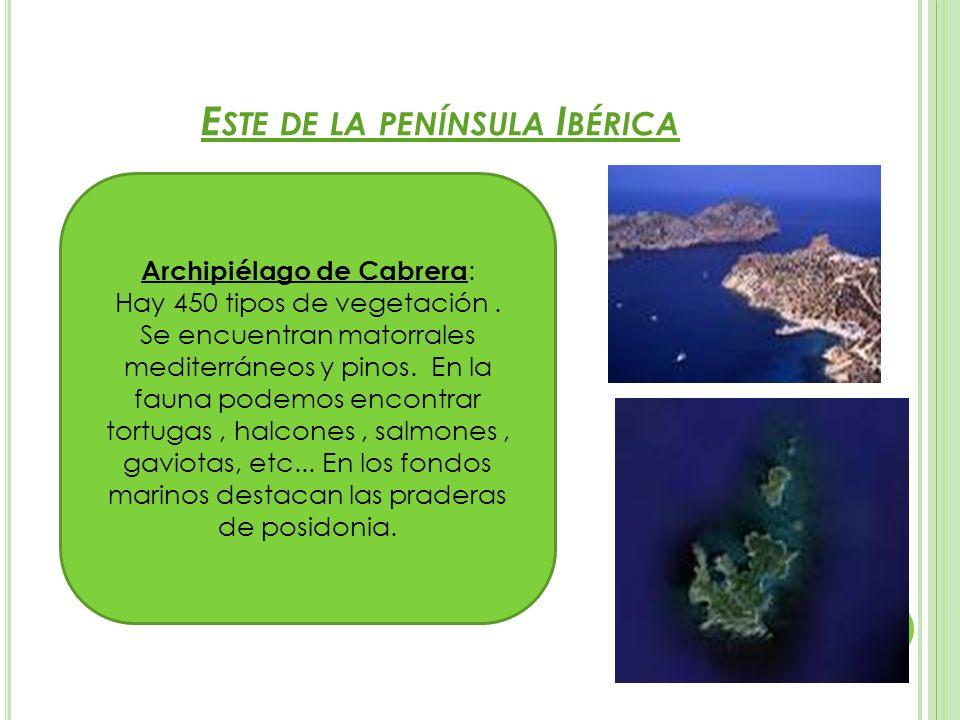 E STE DE LA PENÍNSULA I BÉRICA Archipiélago de Cabrera : Hay 450 tipos de vegetación. Se encuentran matorrales mediterráneos y pinos. En la fauna pode