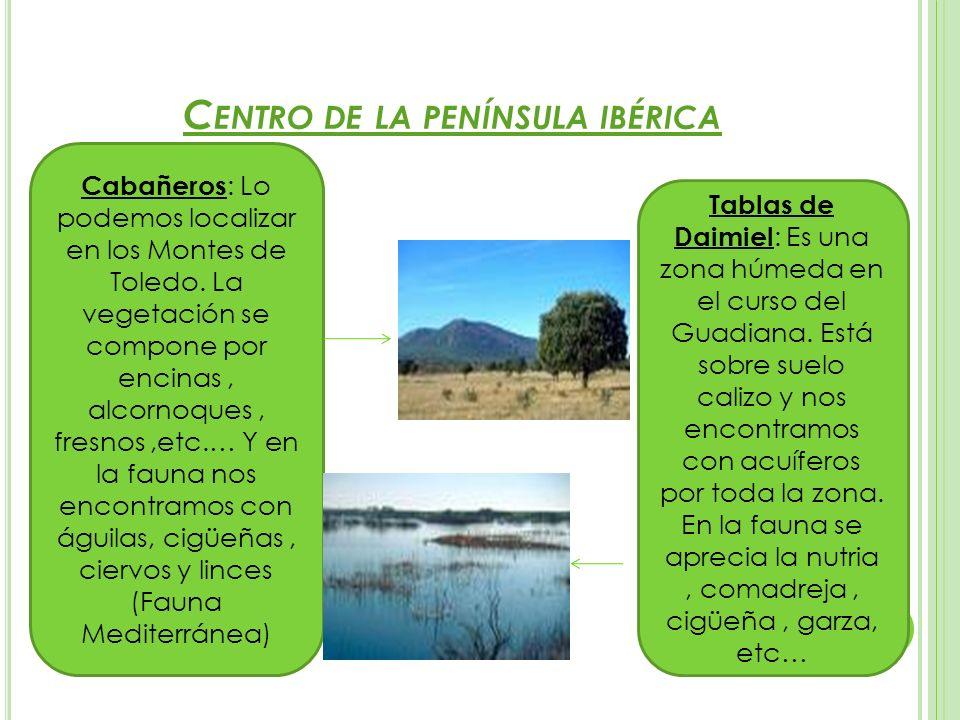 C ENTRO DE LA PENÍNSULA IBÉRICA Cabañeros : Lo podemos localizar en los Montes de Toledo. La vegetación se compone por encinas, alcornoques, fresnos,e