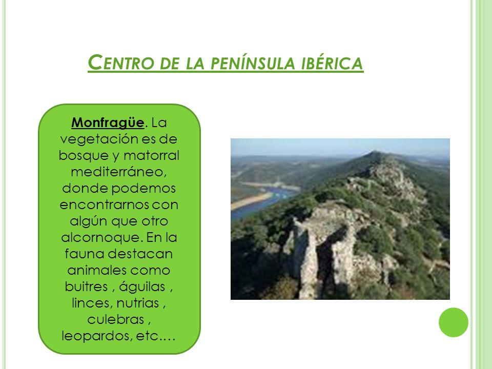 C ENTRO DE LA PENÍNSULA IBÉRICA Monfragüe. La vegetación es de bosque y matorral mediterráneo, donde podemos encontrarnos con algún que otro alcornoqu