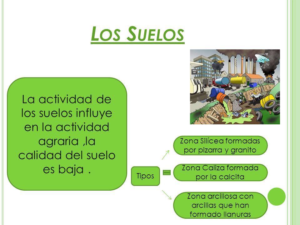 L OS S UELOS La actividad de los suelos influye en la actividad agraria,la calidad del suelo es baja. Zona Silícea formadas por pizarra y granito Zona