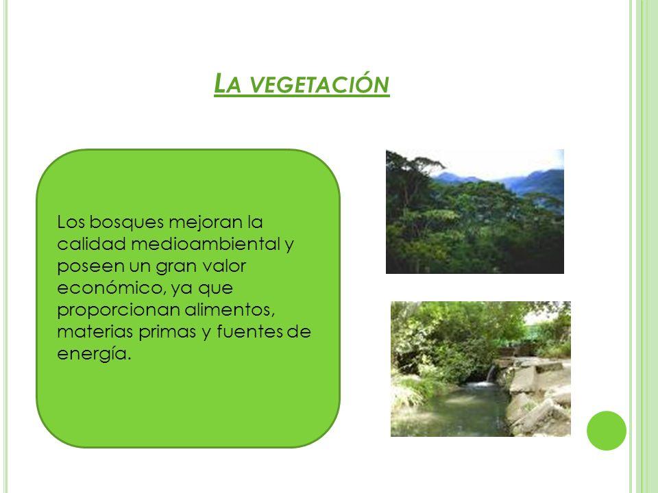 L A VEGETACIÓN Los bosques mejoran la calidad medioambiental y poseen un gran valor económico, ya que proporcionan alimentos, materias primas y fuente