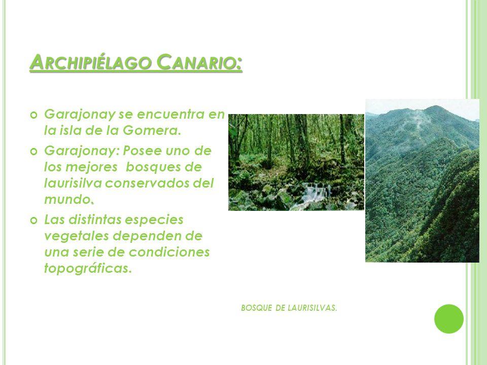 A RCHIPIÉLAGO C ANARIO : Garajonay se encuentra en la isla de la Gomera.. Garajonay: Posee uno de los mejores bosques de laurisilva conservados del mu