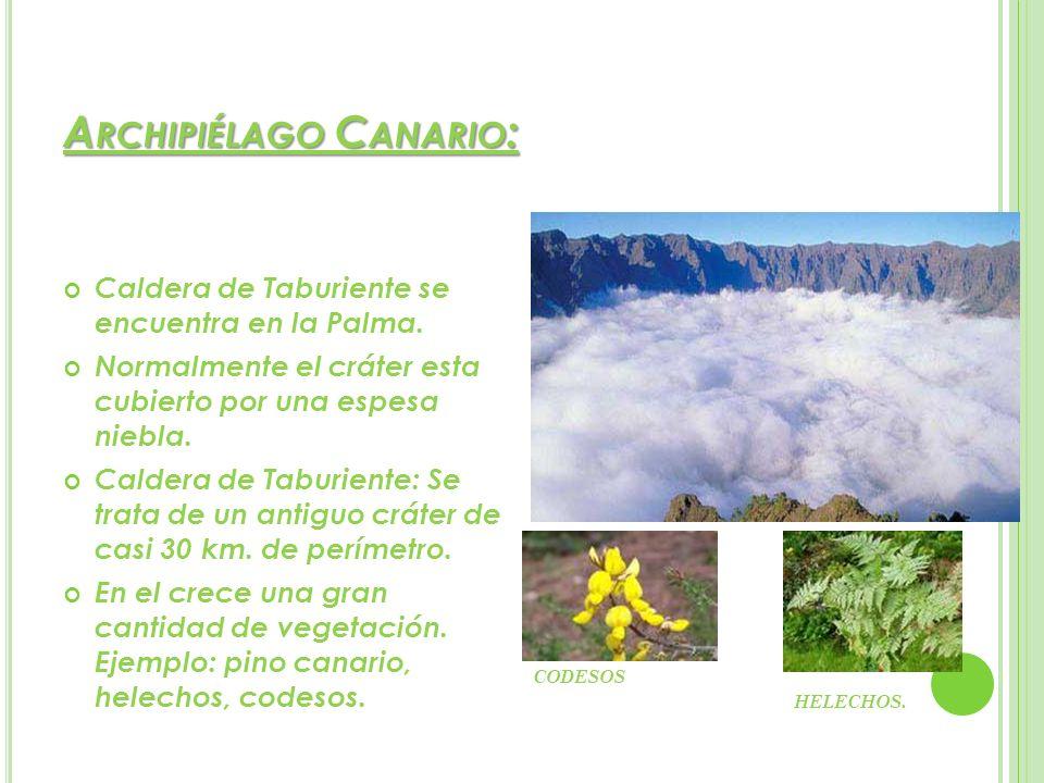 A RCHIPIÉLAGO C ANARIO : Caldera de Taburiente se encuentra en la Palma. Normalmente el cráter esta cubierto por una espesa niebla. Caldera de Taburie