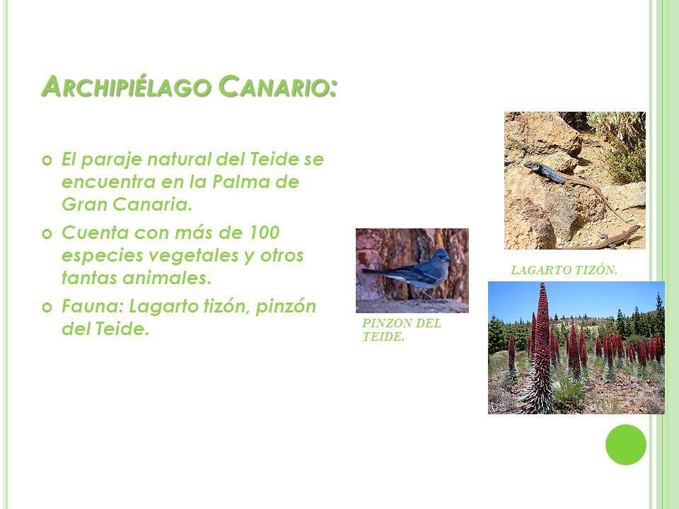 A RCHIPIÉLAGO C ANARIO : El paraje natural del Teide se encuentra en la Palma de Gran Canaria. Cuenta con más de 100 especies vegetales y otros tantas