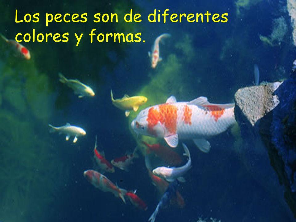 Los peces son de diferentes colores y formas.