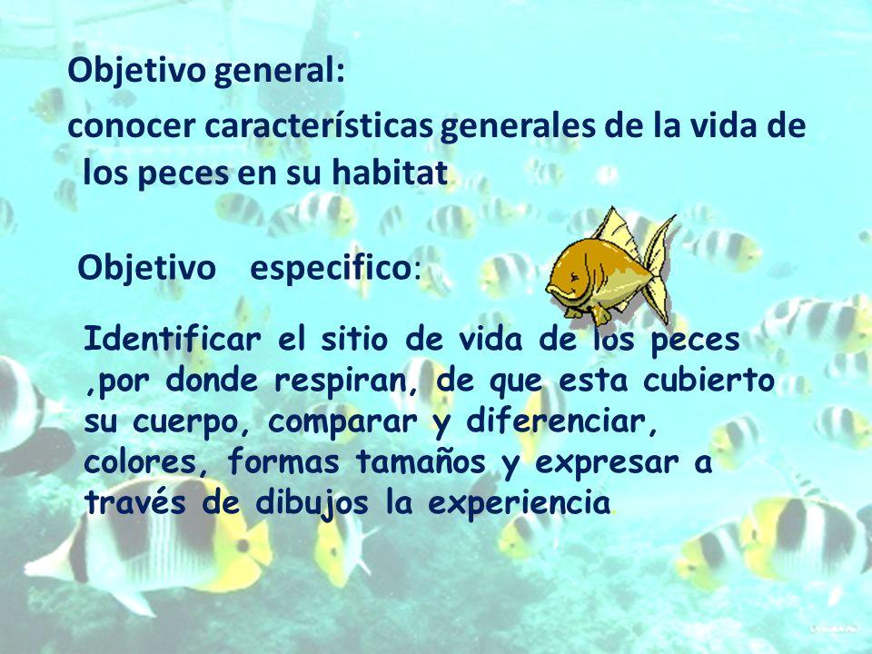 Objetivo general: conocer características generales de la vida de los peces en su habitat Identificar el sitio de vida de los peces,por donde respiran