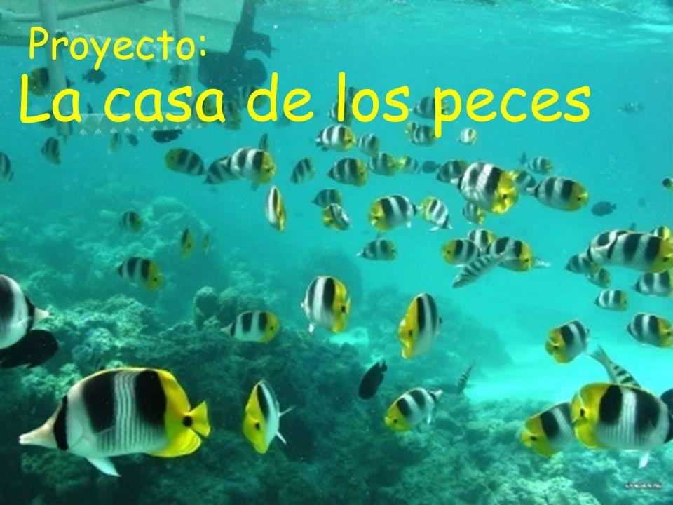¿Sabias que? Los peces abren la boca Para tomar agua y coger el Oxigeno.
