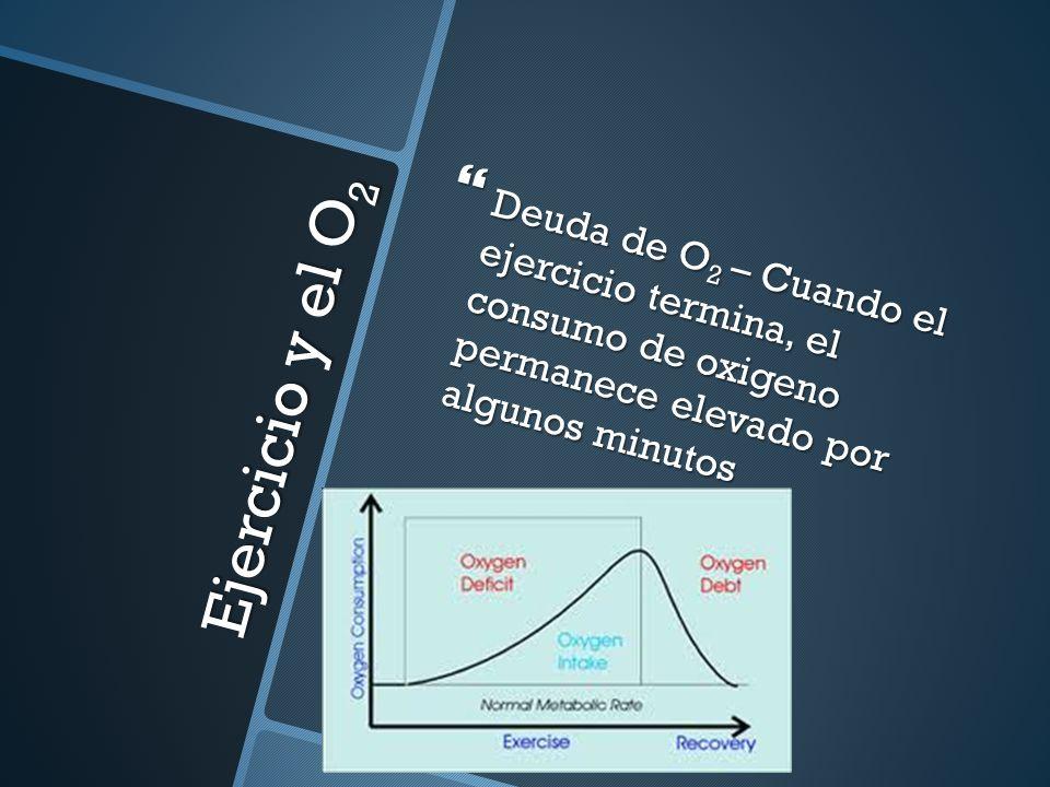 Deuda de O 2 – Cuando el ejercicio termina, el consumo de oxigeno permanece elevado por algunos minutos Deuda de O 2 – Cuando el ejercicio termina, el